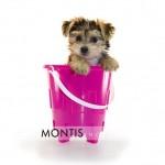 Giad The Cutest Morkie Blog